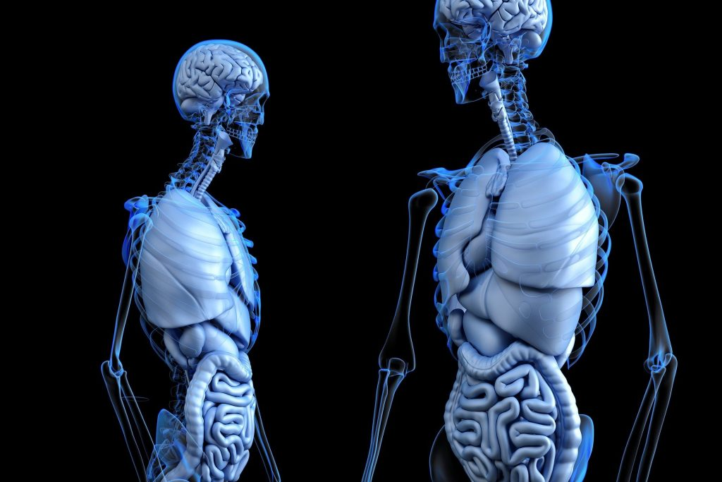 anatomical 2261006 1920