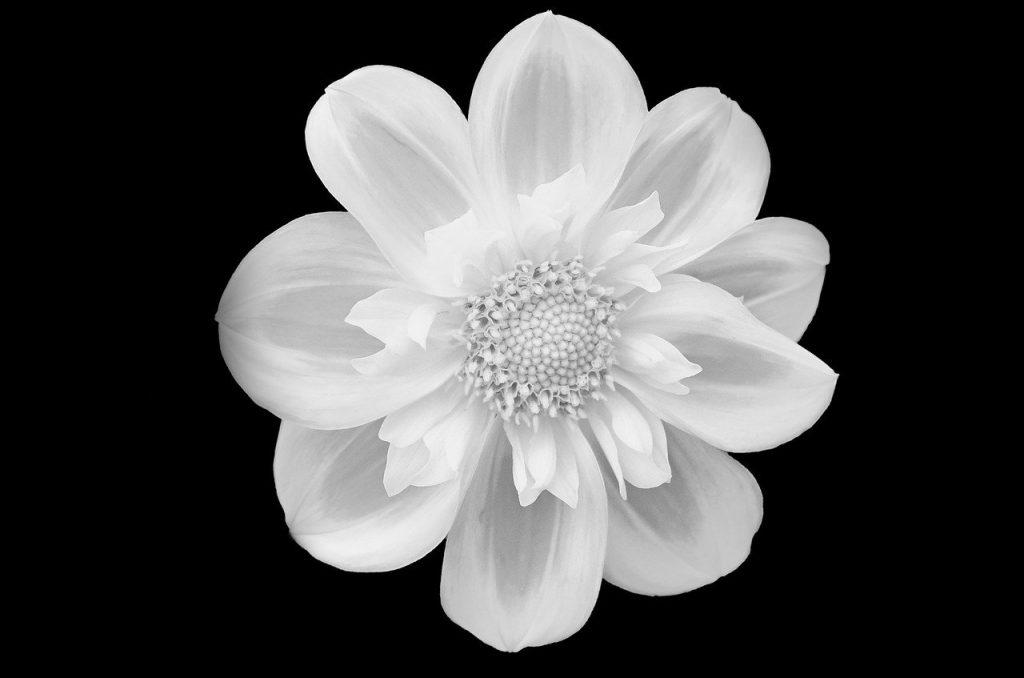 flower 219963 1280
