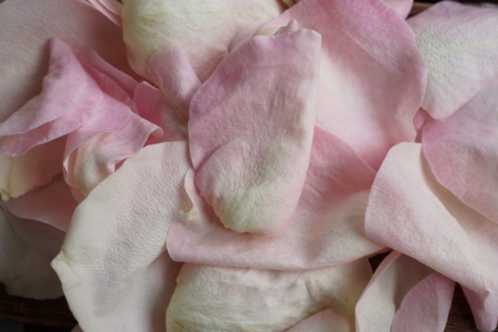 rose 4367117 1920